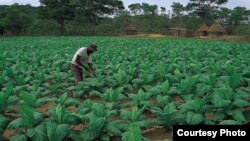 Smallholder farmers are facing serious challenges in southern Africa such as perrenial droughts and erratic rainfall patterns. (File Photo/Courtesy Photo)