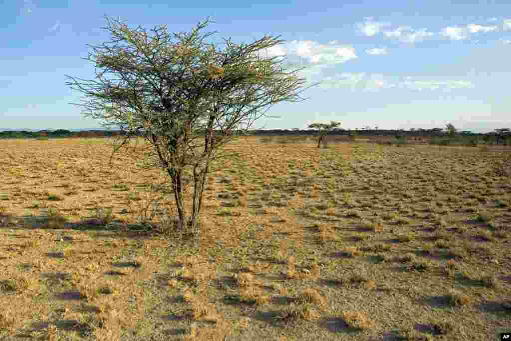 Semi-arid savanna in Samburu National Reserve, Kenya. (Photo: Vicente Polo)