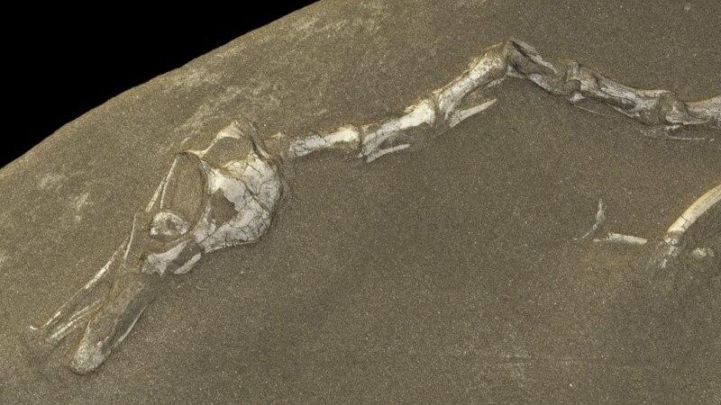 New Dinosaur Looks Like Odd Mix of Duck, Crocodile, Ostrich, Swan