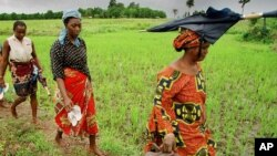 Women farmers walk home after working for 10 hours in the Nerica rice fields near Maferenya, Guinea, in this Aug. 19, 2002 file photo.