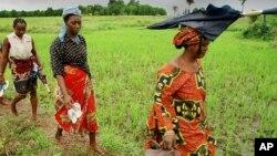 Des agricultrices après dix heures de travail dans les rizières de Nerica près de Maférénya en Guinée, le 19 août 2002.