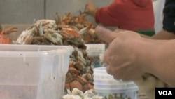 Ručno vadjenje mesa kraba u kompaniji G.W Hall@Son u Mearylandu obično rade sezonski radnici iz Mexica