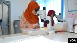 Para peneliti bekerja di insektarium Fakultas Kedokteran UGM dalam program Eliminate Dengue Project. (VOA/Nurhadi Sucahyo)