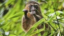 Eco: l'économie touristique malgache en berne