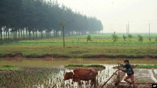 Đất đai, nước, và lúa mọc trong vùng ô nhiễm đều có thể gây độc cho người.