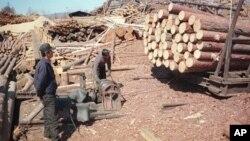 지난 2003년 5월 러시아 극동 아무르주 자린그라의 제재소에서 북한 벌목공들이 일하고 있다. 북한은 외화벌이를 위해 노동자들을 해외로 파견하고 있다.