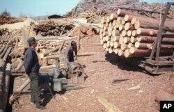 지난 2003년 5월 러시아 극동 아무르주 자린그라의 제재소에서 북한 벌목공들이 일하고 있다. 북한은 외화벌이를 위해 노동자들을 해외로 파견하고 있다. (자료사진)