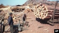 지난 2003년 5월 러시아 극동 아무르주 자린그라의 제재소에서 북한 벌목공들이 일하고 있다. (자료사진)