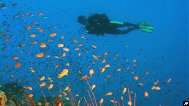 A scuba diver swims in this handout photo from the journal Science (file photo)