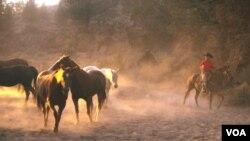 La temporada de captura durará dos meses en el estado de Nevada.