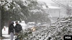 Dua orang warga Lodi, New Jersey, mengamati pohon yang roboh akibat badai salju bulan Oktober yang langka terjadi. Badai salju menghantam negara bagian tersebut akhir pekan kemarin (29/10).
