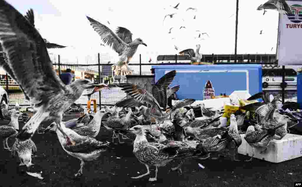 Burung-burung camar berebut sisa-sisa ikan di pasar ikan Karakoy, Istanbul, Turki.
