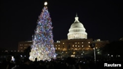 The U.S. Capitol Christmas Tree is pictured against a backdrop of the U.S. Capitol Building in Washington, December 4, 2012.