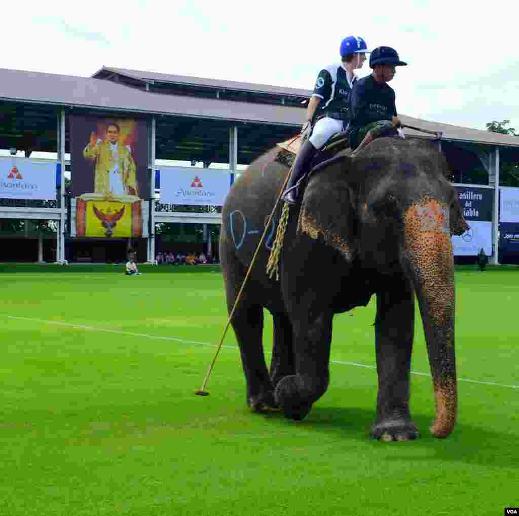 The stick for elephant polo measures two meters long, 2014 King's Cup Elephant Polo Tournament in Samut Prakan province, on the outskirts of Bangkok, Aug. 28, 2014. (Steve Herman/VOA).