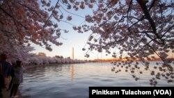 Vizitorët duke fotografuar nga larg Monumentin e Uashingtonit