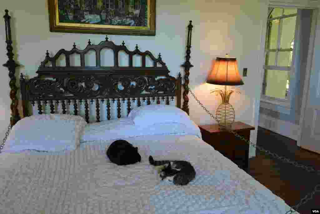 На кровати в спальне писателя разрешается полежать не всем котам и кошкам.