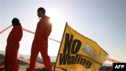 Các nhà hoạt động của Tổ chức Hòa bình Xanh phản đối việc săn cá voi