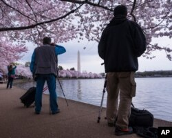 FILE - Photographers line up to take pictures of the blooming cherry tree blossoms that ring the tidal basin in Washington, March 25, 2016.