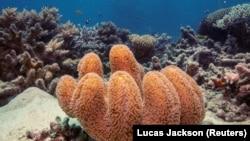 រូបឯកសារ៖ ទិដ្ឋភាពនៅក្រោមផ្ទៃទឹកនៃតំបន់ថ្មប៉ប្រះទឹក Great Barrier Reef ក្នុងប្រទេសអូស្ត្រាលី ថ្ងៃទី២៥ ខែតុលា ឆ្នាំ២០១៩។
