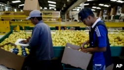 FILE - Workers package lemons into boxes at a plant in Tucuman, Argentina, April 10, 2017.