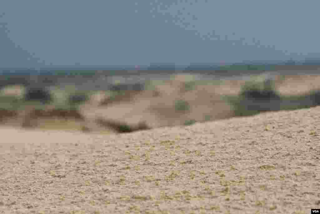 Алёшковские пески расположены в тридцати километрах от украинского города Херсон. Они состоят из дюн и песчаных бугров (местные жители называют их «кучугурами»), высотой около 5 метров. Диаметр массива пятнадцать километров