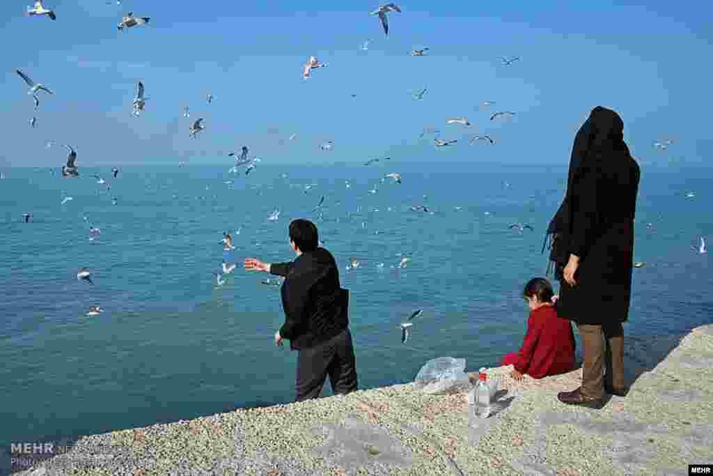 فصل پاییز تا اوایل بهار، پرندگان زیادی در مسیر مهاجرت خود را به مناطق جنوب و غرب آسیا، از استان بوشهر می گذرند. این هم عکس کاکایی ها در بوشهر. عکس رضا عنصر سیار، مهر
