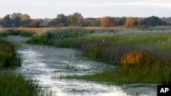 រូបឯកសារ ៖ ថ្ងៃលិចនៅតំបន់ដីសើម St. John's Marsh ក្នុងសង្កាត់ Clay រដ្ឋ Michigan។