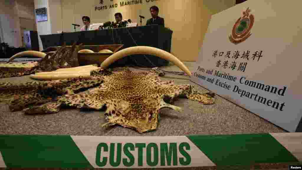 Jami'an kwastan din Hong Kong ranar Talatan nan sun cafke hakoran giwa da nauyinsu ya kai kilo 1,120 da hakoran mugun dawa 13 da fatun damisa 5 dukansu nauyinsu ya kai kilo 2,266 a cikin wani akwati duk daga Najeriya zuwa kasar Hong Kong.
