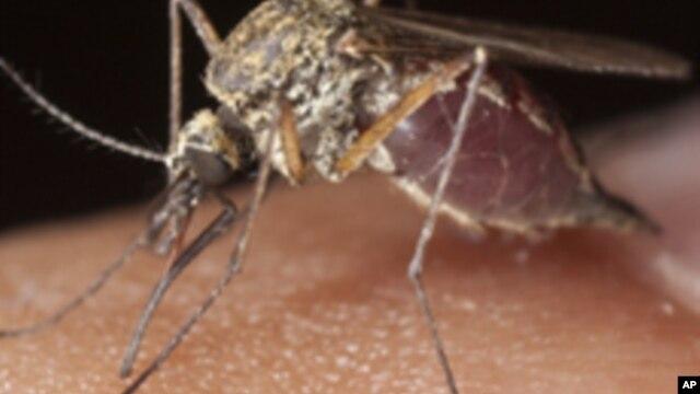 Angola: Malária é a primeira causa de mortalidade no país