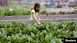 Girl Grows Vegetables in City Garden.