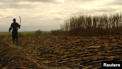 A worker harvests sugarcane near Swaziland's capital, Mbabane, June 2005.