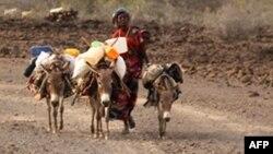 Une Djiboutienne conduit ses ânes dans le village de Garabtisan, au nord de Djibouti.