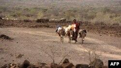 La sècheresse ravage Djibouti depuis 4 ans
