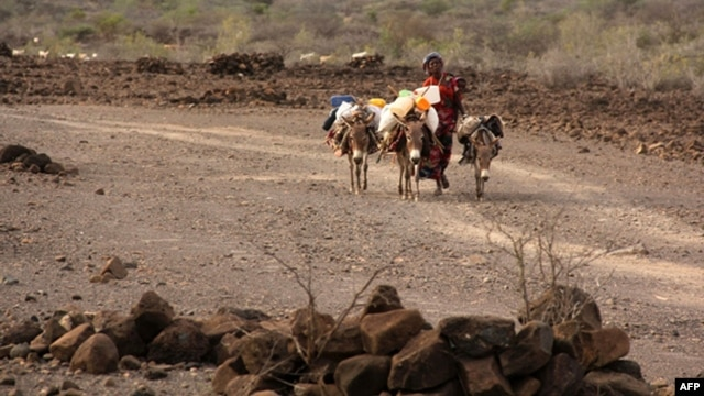 FILE - A 2011 photo shows a Djiboutian woman with her donkeys looking for pastures in Garabtisan, a village in northern Djibouti.