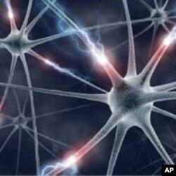 دماغ کا دشمن کون؟