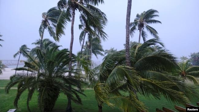 Palmeras azotadas por el viento en Marsh Harbour, Bahamas, en la Isla Gran Ábaco, en las Bahamas, el 1 de septiembre de 2019, poco antes de que el huracán Dorian tocara tierra en el área. Reuters/Dante Carrer.