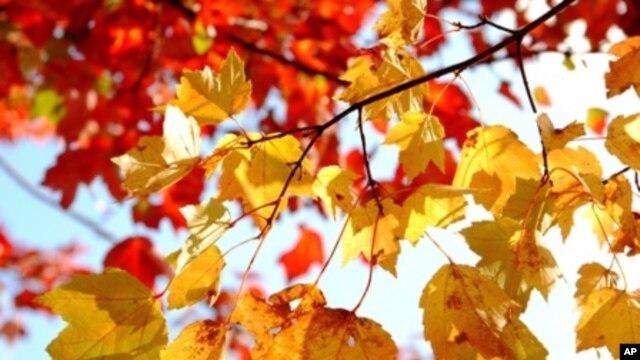บรรยากาศเที่ยวชมความงามสีสันธรรมชาติของไม้ผลัดใบในฤดูใบไม้ร่วง(Fall Season)ที่สหรัฐฝั่งตะวันออก