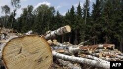 Orman Katliamıyla Mücadelenin Çözümü Ağaçlandırma