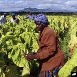 چین کے زمبابوے میں ایک لاکھ ہیکٹرز سے زائد زمین لیز پر لے رکھی ہے