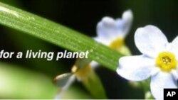 世界自然基金会在中国运作已三十一年