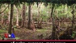 River of Grass: Florida's Everglades