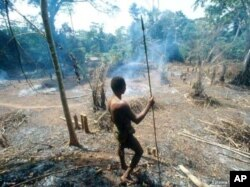 A Pygmy surveys the destruction wrought on a forest by a logging company