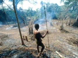 A Pygmy surveys the destruction wrought on a forest by a logging company
