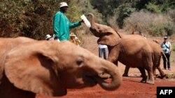L'orphelinat des éléphants David Sheldrick au parc national de Nairobi, Kenya, 18 septembre 2017.