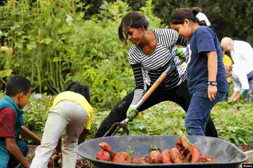 U.S. first lady Michelle Obama harvests vegetables from the White House kitchen garden with schoolchildren in Washington, D.C., Oct. 14, 2014.