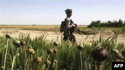 Một binh sĩ Mỹ tuần tra tại quận Maiwand, tỉnh Kandahar (ảnh tư liệu)