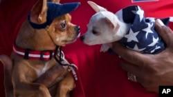 La conexión entre humanos y perros es impulsada en parte por la oxitocina, hormona activa en el cerebro de seres humanos y perros.