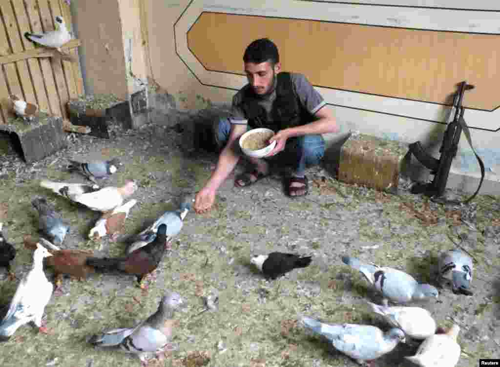 A Free Syrian Army fighter feeds pigeons in Homs, May 26, 2013.