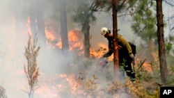 A firefighter uses a drip torch to burn the edges of an area up to a fire break in Chelan, Washington, Aug. 27, 2015.