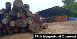 Kayu bulat yang ada di perusahaan kayu di Gresik.(FotoL Courtesy/PPLH Mangkubumi)